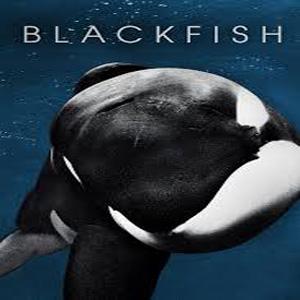 Blackfish_1