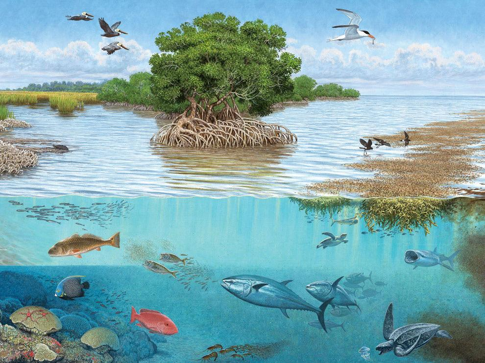 IMAGE FROM NATIONAL GEOGRAPHIC Animals, plants and non living resources all must be present for ecosystems to work effectively. Day by day, Americans take advantage of the world's natural resources, which affects more than just the human population. If habits are not changed now, species will continue to go extinct.