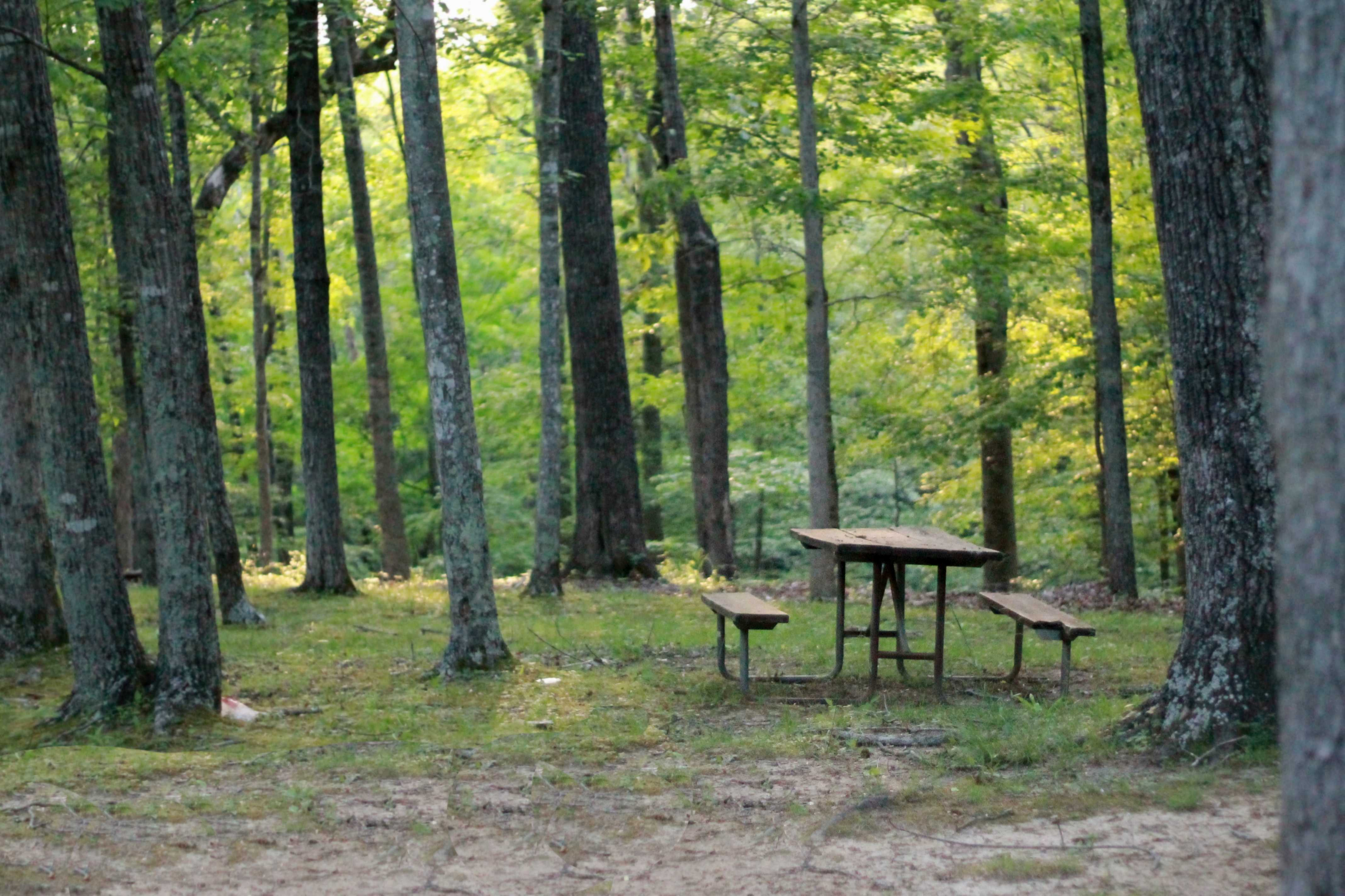 picnic-table-837221