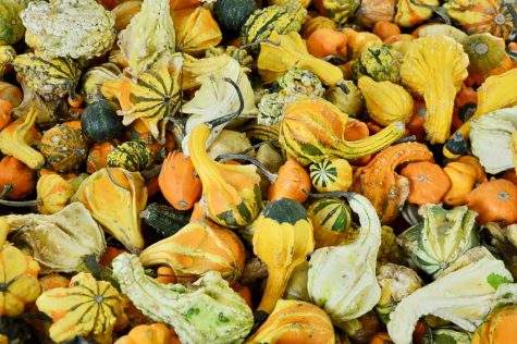 Editorial: Gourds Galore